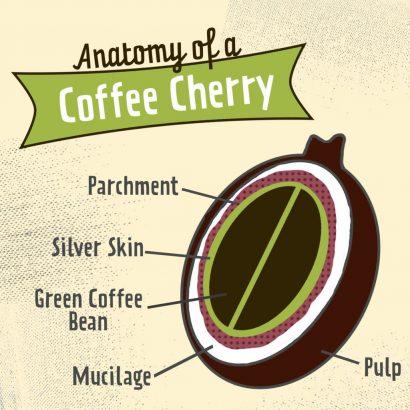 anatomy of a cherry