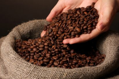 arabica coffee beans in hand