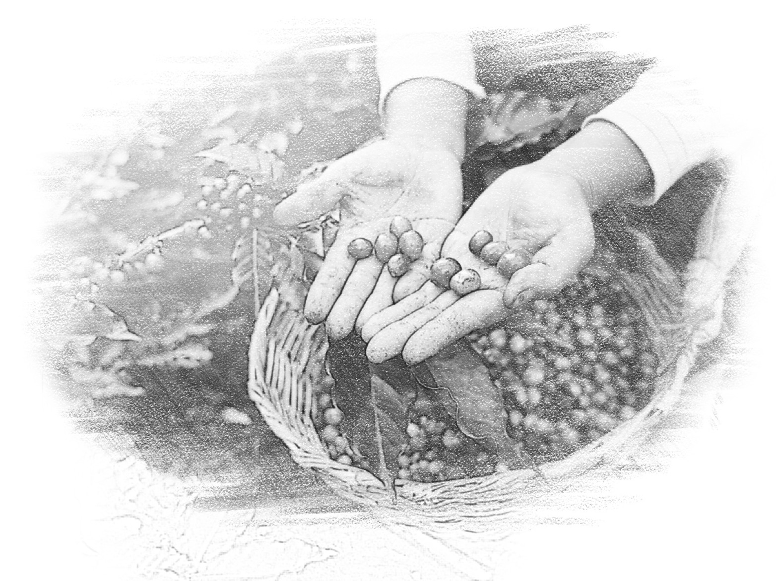 coffee-beans-sketch-effect