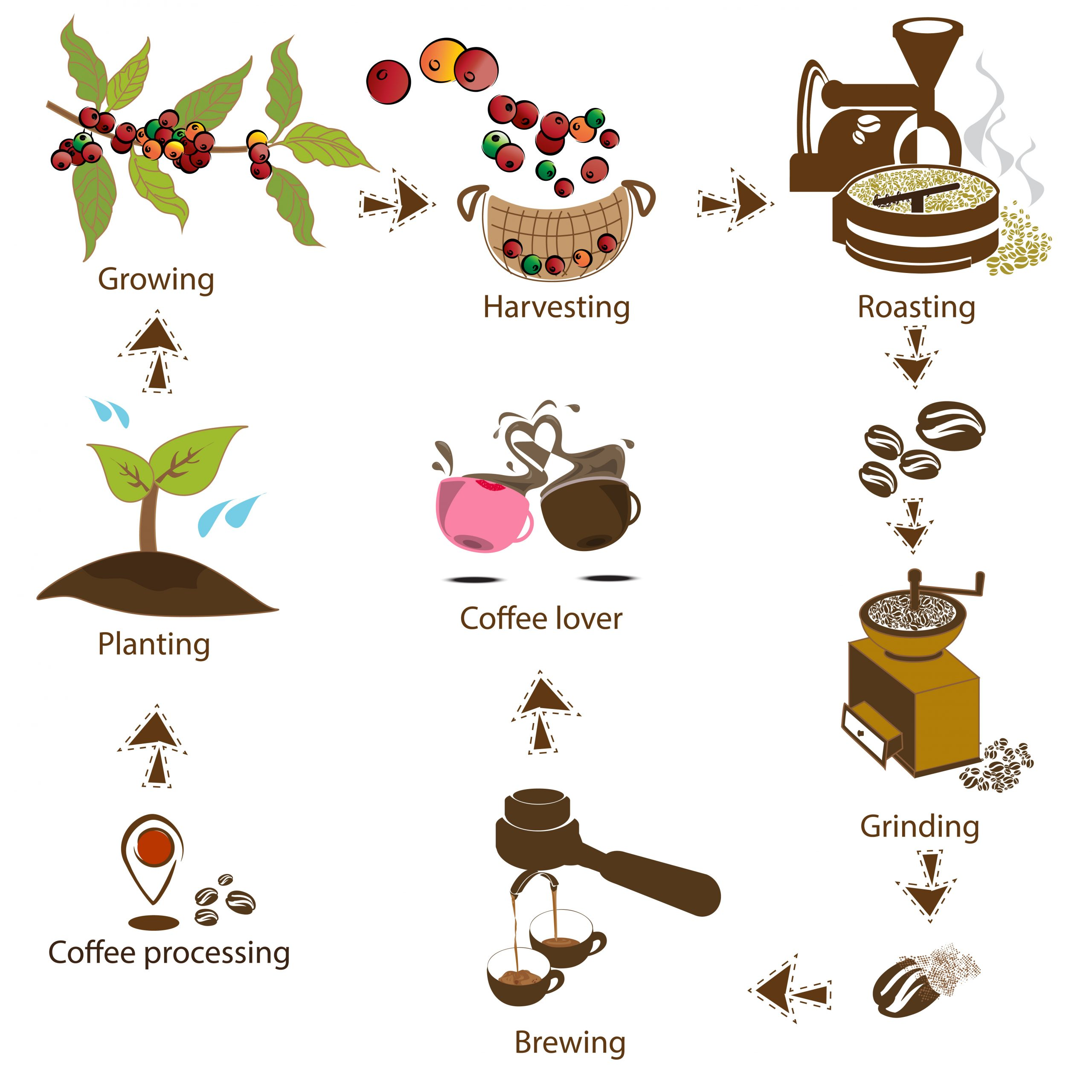 coffee process